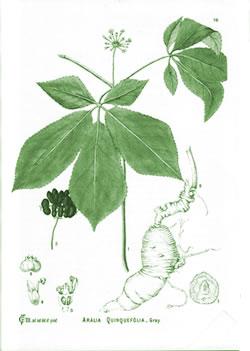 nizoral cream janssen